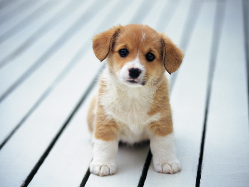 So-cute-puppies-14749028-1600-1200